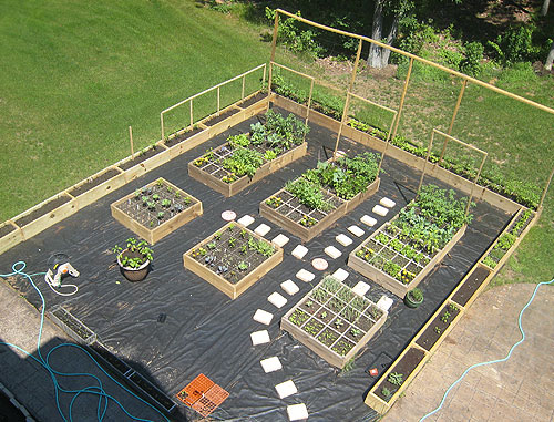 Best Vegetable Garden Layout