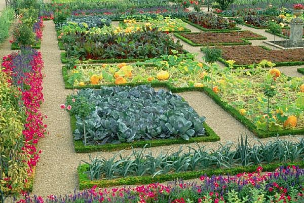 Vegetable-Garden-Layout1